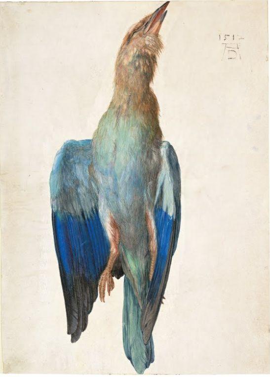 dead-bluebird-1512.jpg!Blog