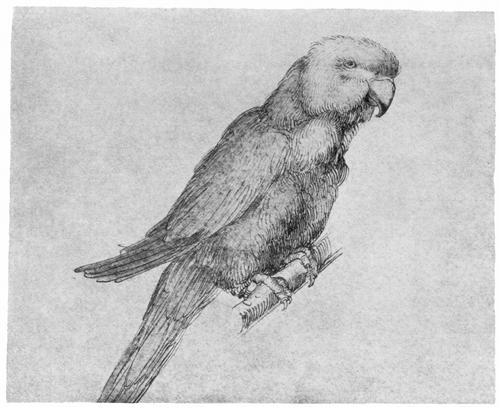 parrot.jpg!Blog