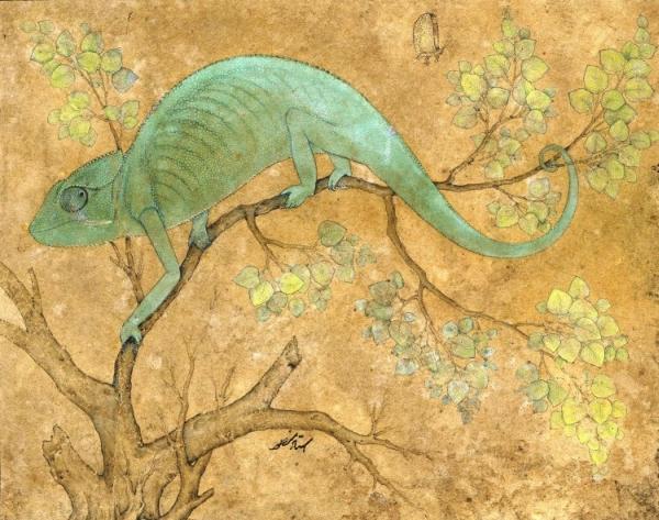 a-chameleon-1612