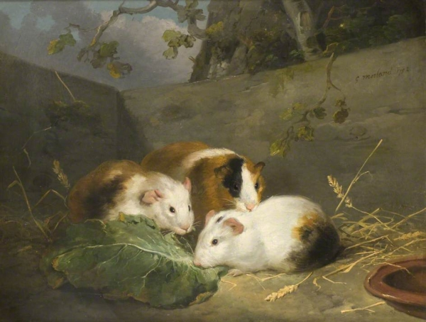 http://uploads1.wikiart.org/images/george-morland/guinea-pigs-1792.jpg